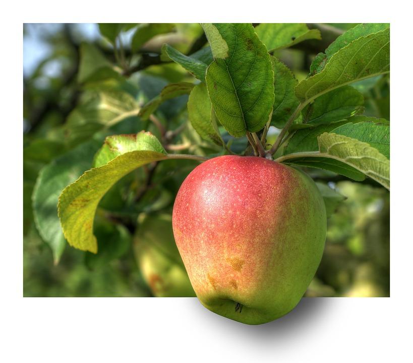 แอปเปิ้ล,การรักษาโรค,สารต้านอนุมูลอิสระ